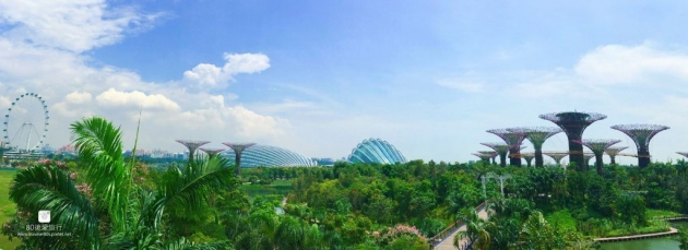 42_garden by the bay (2)_副本_mh1593181982750_compress99.jpg